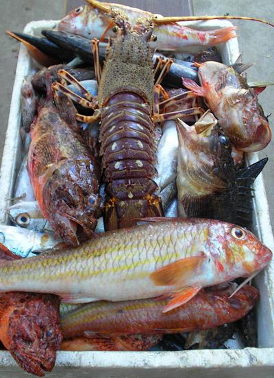 Island Hvar sea food